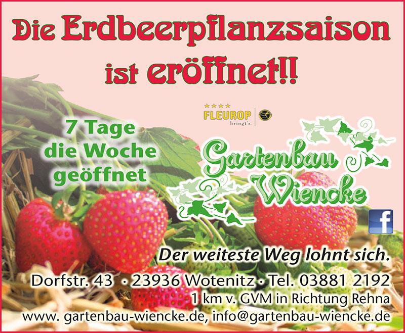 Erdbeerenpflanzen für den Genuss im nächsten Jahr